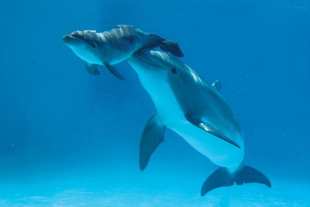 Dolphin-and-its-Mother2
