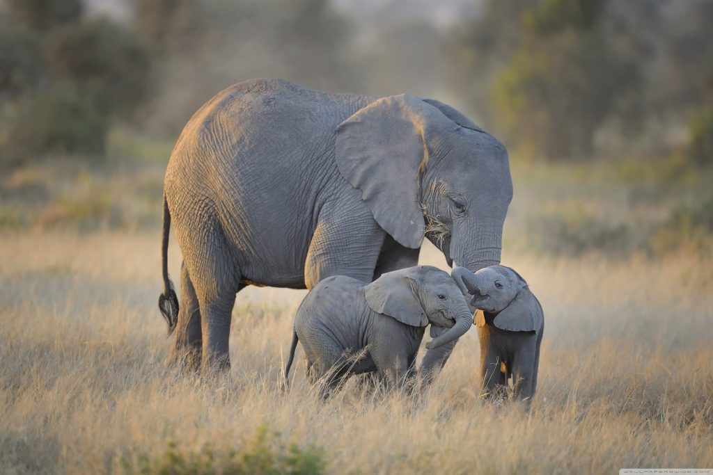 african_elephants_mother_and_adorable_babies-wallpaper-3000x2000
