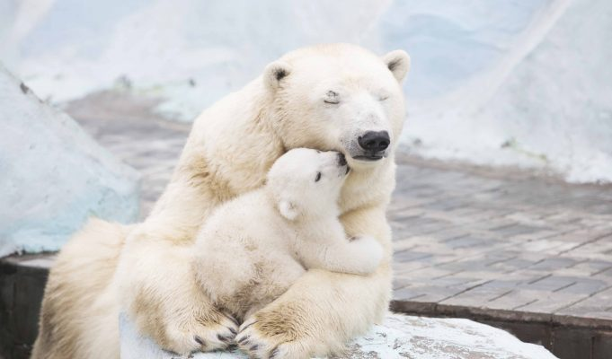 Ultimate Love Between Mother and Daughter
