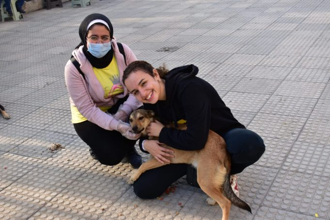 Animal right events in egypt